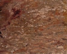 Daltile Granite  Natural Stone Slab Crema Bordeaux Copper G490SLAB11/41L