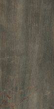Paramount Tile Fossil BRUNO MD1066586