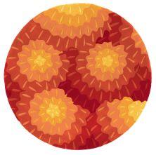 Momeni New Wave Nw-69 Orange 7'9″ x 7'9″ Round NEWWANW-69ORG790R