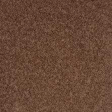 Shaw Floors Shaw Flooring Gallery Woodsboro Pine Bark 00702_5278G