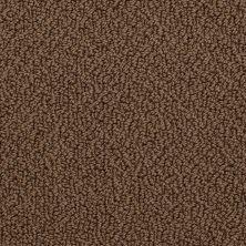 Shaw Floors Traditional Elegance Dark Spice 00713_52P13
