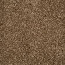 Shaw Floors Shaw Flooring Gallery Grand Image II Bonsai 00324_5350G
