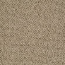 Shaw Floors Shaw Flooring Gallery Supreme Comfort Loop Driftwood 00700_5469G