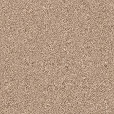 Shaw Floors Take The Floor Tonal II Sienna 00761_5E009