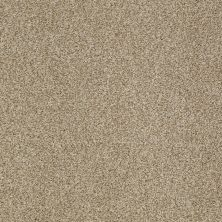 Shaw Floors Infinity Soft Zymes Lg Llama 00701_7E0D4