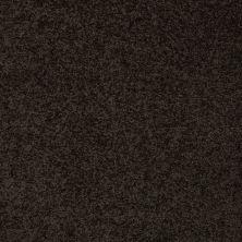 Anderson Tuftex Bear Bristol 00704_950DF