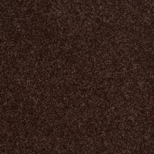 Shaw Floors Clearly Chic Bright Idea I Dark Chocolate 00706_E0504