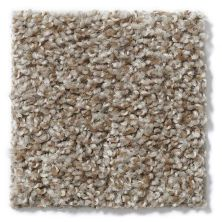 Shaw Floors Value Collections Expect More (t) Net Pebble Path 00730_E0738