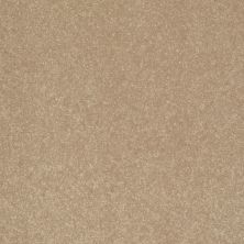 Shaw Floors Value Collections Secret Escape III Net Golden Lab 00200_E0805