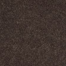 Shaw Floors Value Collections Remember Me (s) Net French Roast 00745_E0892