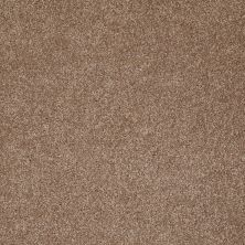 Shaw Floors Value Collections Look Forward Net Acorn 00700_E9125