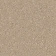 Shaw Floors Value Collections Passageway 3 12 Net Fresco 00109_E9154