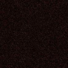 Shaw Floors Value Collections Passageway 3 12 Net Dark Roast 00709_E9154