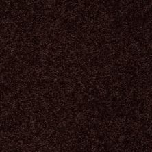 Shaw Floors Value Collections Passageway 3 Net Dark Roast 00709_E9377
