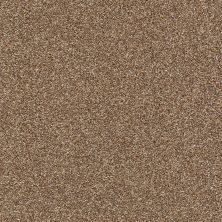 Shaw Floors Value Collections Boston It Is Chestnut 00703_E9907