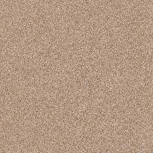 Shaw Floors Nfa/Apg Color Express Tonal II Sienna 00761_NA212
