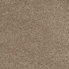 Shaw Floors Nfa/Apg Detailed Tonal Twig 00702_NA340