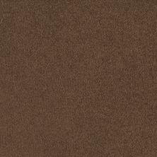 Shaw Floors Shaw Flooring Gallery Truly Modern I 12′ Pine Cone 00703_Q263G