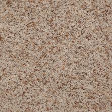 Shaw Floors Shaw Flooring Gallery Gadsden (b) Thatch 00720_Q282G