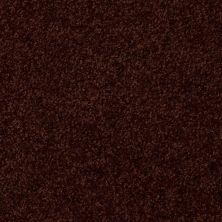 Shaw Floors Shaw Flooring Gallery Invite Possibility III Fresh Coffee 00708_Q316G