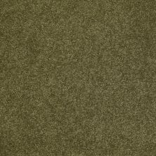 Shaw Floors Shaw Flooring Gallery Beau Rivage Crocodile 00323_Q334G