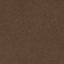 Shaw Floors Anso Premier Dealer Great Effect I 12′ Pine Cone 00703_Q4327