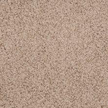 Shaw Floors Anso Premier Dealer Galileo (s) Dried Apple 00108_Q4534