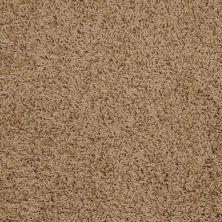 Shaw Floors Anso Premier Dealer Galileo (s) Sahara 00201_Q4534