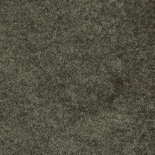 Shaw Floors Roll Special Xv375 Hedges 00301_XV375