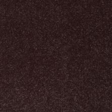 Shaw Floors Roll Special Xv425 Dark Chocolate 00716_XV425