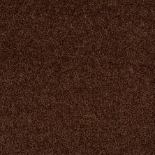 Shaw Floors Roll Special Xv477 Mocha 00708_XV477