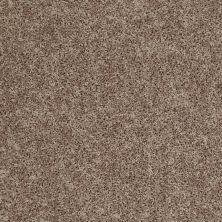 Shaw Floors Roll Special Xv669 Twig 00702_XV669