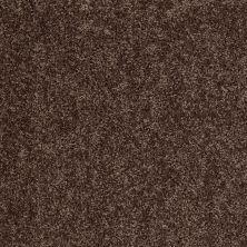 Shaw Floors Roll Special Xv669 Nutshell 00704_XV669