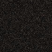 Shaw Floors Roll Special Xy138 Wild Horses 00704_XY138