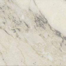 Casa Roma ® Carrara Select Arabescato (24×48 Honed Rectified) CASIRG2448143
