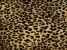 Kane Affordable Luxury Collection AGILE CHEETAH FFRDCHTH