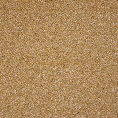 Stainmaster Petprotect Stainmaster – Petprotect BICHON Dark Straw A4681-13742