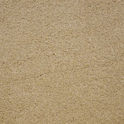 Stainmaster Petprotect Stainmaster – Petprotect BICHON Tender Taupe A4681-14729