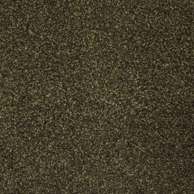 Stainmaster Petprotect Stainmaster – Petprotect COLLIE Smoky Brown A4683-77917