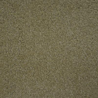 Stainmaster Petprotect Stainmaster – Petprotect TERRIER Bistre Grey A4685-74299