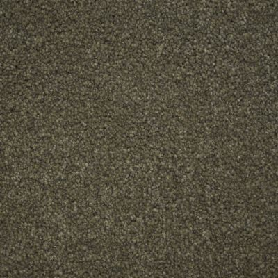 Stainmaster Petprotect Stainmaster – Petprotect TERRIER North American Grey A4685-89832