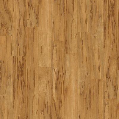 Shaw Floors SFA Casa Plus Colori 00506_503SA
