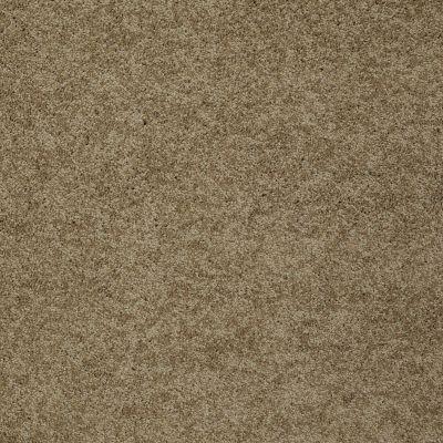 Shaw Floors Shaw Flooring Gallery Inspired By II Twig 00702_5560G