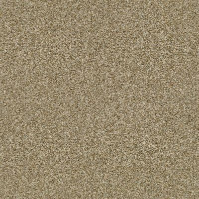 Shaw Floors Simply The Best Cabana Life (t) Net Dried Clay 00137_5E047