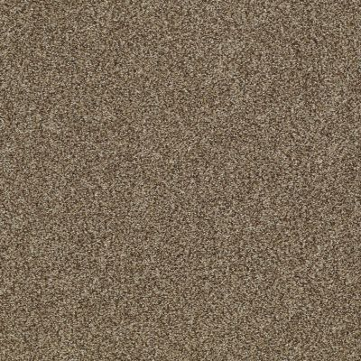 Shaw Floors Infinity Soft Zymes Welsh Hill 00704_749J8