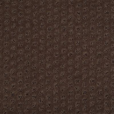Shaw Floors Caress By Shaw My Expression Lg Bison 00707_CC28B
