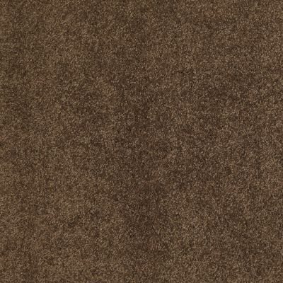 Shaw Floors Caress By Shaw Quiet Comfort II Bison 00707_CCB31