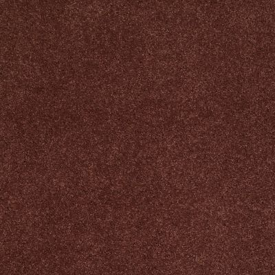 Shaw Floors Caress By Shaw Quiet Comfort Iv Guanaco 00603_CCB33