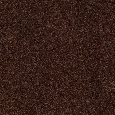 Shaw Floors Sandy Hollow Classic I 12′ Coffee Bean 00711_E0548