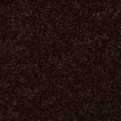 Shaw Floors Value Collections All Star Weekend III 15′ Net Coffee Bean 00705_E0816